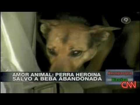 Dog saves newborn BABY amazing animal!!