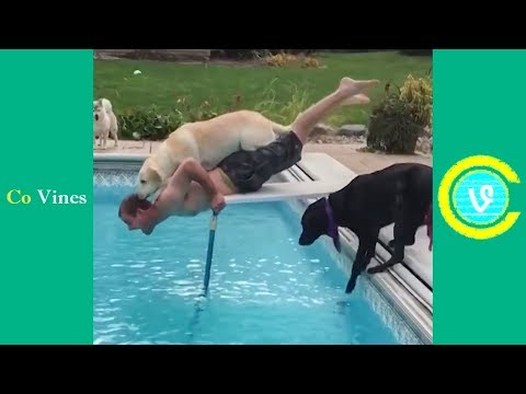 Try Not To Laugh Watching Funny Animal Fails Compilation November 2018 1 Co Vines✔