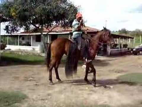 Cavalos . e Eguas Parte 2