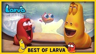 LARVA | BEST OF LARVA | Funny Cartoons for Kids | Cartoons For Children | LARVA 2017 WEEK 20