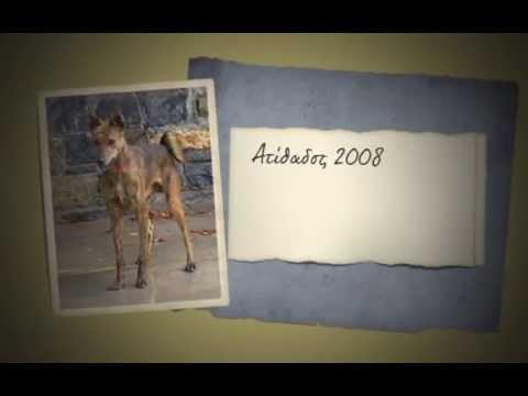 Σκυλιά Κρηκύω� 1993 2014