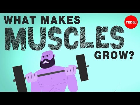 Xxx Mp4 What Makes Muscles Grow Jeffrey Siegel 3gp Sex