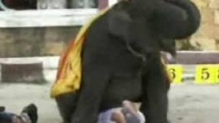 Elephant Humping Man