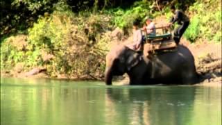 Sur la piste du tigre au Népal - Le tigre du Bengale