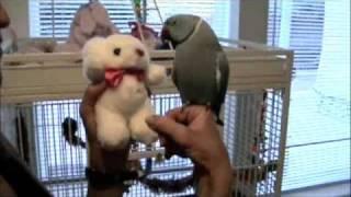 parrot Marnie and teddy bear