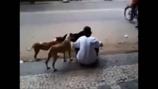 Hero Dog - Protecting Owner Compilation