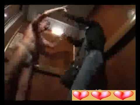Video clip Râu xanh trong thang máy Cu i su t 24gi Video Clip Cu i