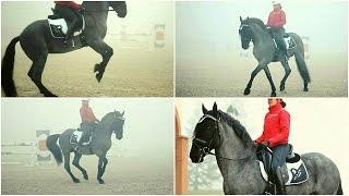 The Blue Stallion ☆ CARLETTO [HD MOVIE]