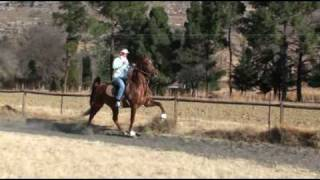 She%27s+The+One+-++Five+Gaited+American+Saddlebred++Mare