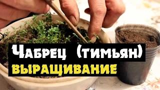 Как выращивать пряные травы на подоконниках - Dmastiers