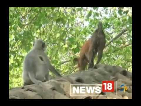 Xxx Mp4 VIDEO कभी देखी नहीं होगी बंदर और कुत्ते की ऐसी लड़ाई 3gp Sex