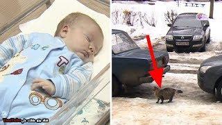 قطة تنقذ رضيع بطريقة لا تصدق تقشعر لها الابدان !!