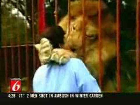 Lion Attack Ataque de leão