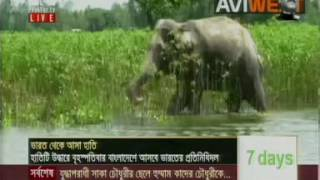 India-Elephant--LIVE-VIDEO-Bangladash-JAMAL PUR