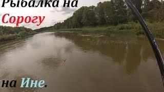 все о рыбалке на реке иня