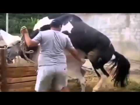 Animal Mating Crazy Videos Compilation ✔ funny animal video 2015 part2 2014