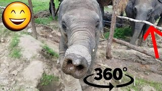 Elephant Sanctuary in Thailand!! - 360 Degree Video!