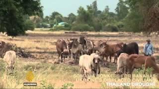 5979 economics agriculture Al Jazeera On Al Jazeera  Somalia goes bonkers for bananas 01 00