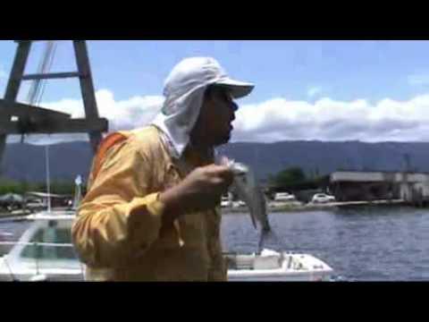 Pescaria de robalo no pier em Bertioga usando camarão artificial