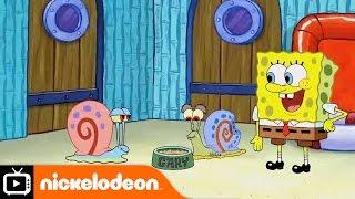 SpongeBob SquarePants   Snail Sanctuary   Nickelodeon UK