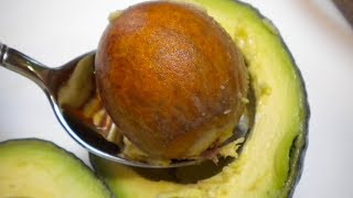 You'll Never Throw Away Avocado Seed After Watching This