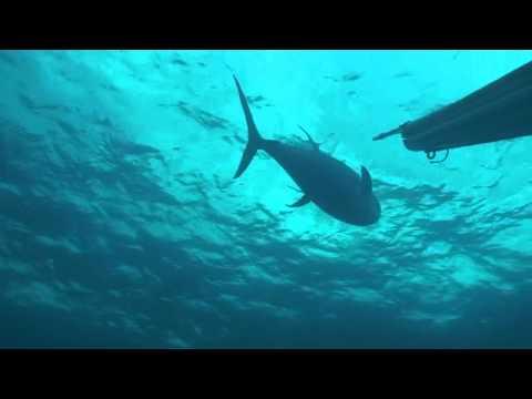 Pesca Sub na América Central por Diego Santiago