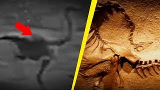 5 Dinosaurs Caught On Camera & Spotted In Real Life!