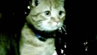 Mon chat !! Poupousse