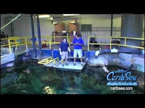 Crazy Fish Store In Asia Aquarium Shop In Vietnam