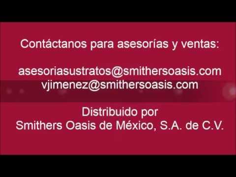Cultivo y germinación de sandía con sustratos hidropónicos OASIS® EASY PLANT®