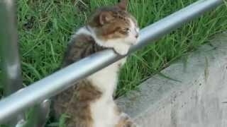 Maç Seyreden Kedi