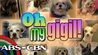 Korina, Sharon, Toni show off their dogs