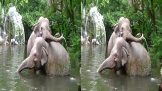 Jungle Cruise in 3D - Side By Side and VR - Full Attraction - Magic Kingdom - Walt Disney World