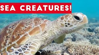 Cutest Sea Creatures of 2017 | Funny Pet Videos