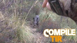 Chasse sangliers/ Top 10 best shots hunting Wild boar / Battue sanglier en Tunisie