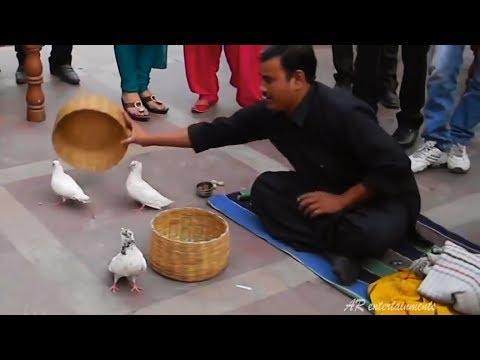 Xxx Mp4 कबूतर बनाने वाला जादू Indian Magic Jadu Magic Trick 3gp Sex
