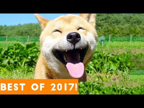 Xxx Mp4 BEST ANIMALS OF 2017 Funny Pet Videos 3gp Sex