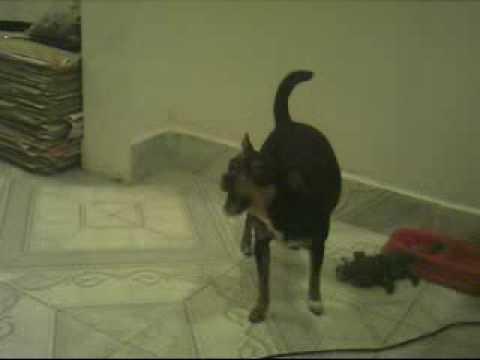 Xxx Mp4 TheBigmarques S Webcam Recorded Video Sex 17 Jul 2009 16 29 15 PDT 3gp Sex
