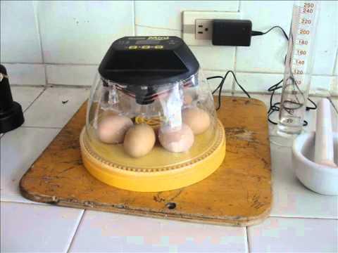 Proyecto Incubación de Huevo