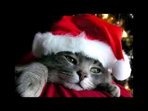 Merry Christmas Everyone Po Polsku