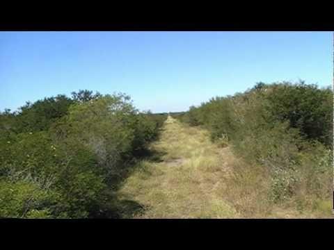 Caceria de Jabali Pecari de collar blanco