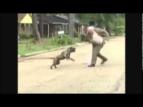 Pastor pilão enfrenta pitbull sai da frente satanas