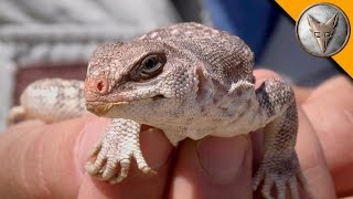 EPIC Lizard Catch! - Part 1