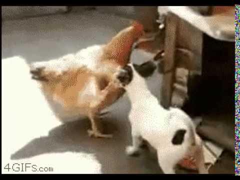 Xxx Mp4 Dog Fucking Chicken 3gp Sex
