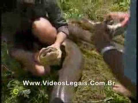 VIDEO QUE MOSTRA UMA SUCURI GRAVIDA