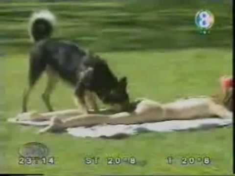 الكلب مضحك