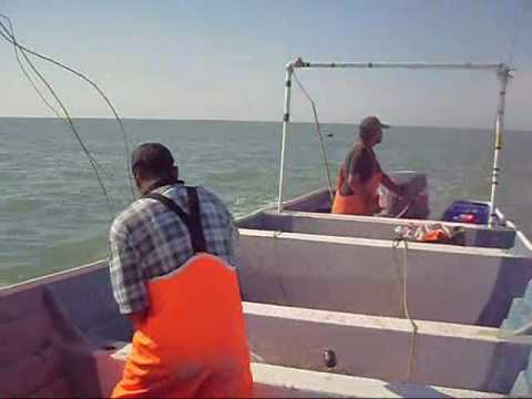 Pesqueria del camaron en el Golfo de Santa Clara Sonora