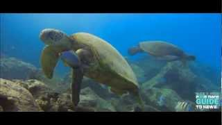 UNDER THE SEA HAWAII HD