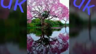 योउ टूबर भइला हो साउथ इंडिया के चक्कर में