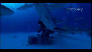 MythBusters - Grabbing the Shark by the Tail